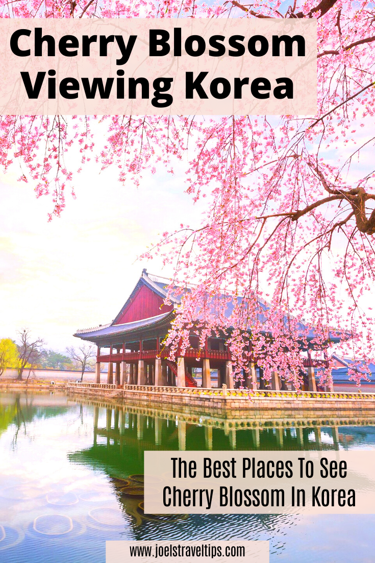 Cherry Blossom Viewing In Korea In 2020 Time In Korea World Travel Guide Korea Travel