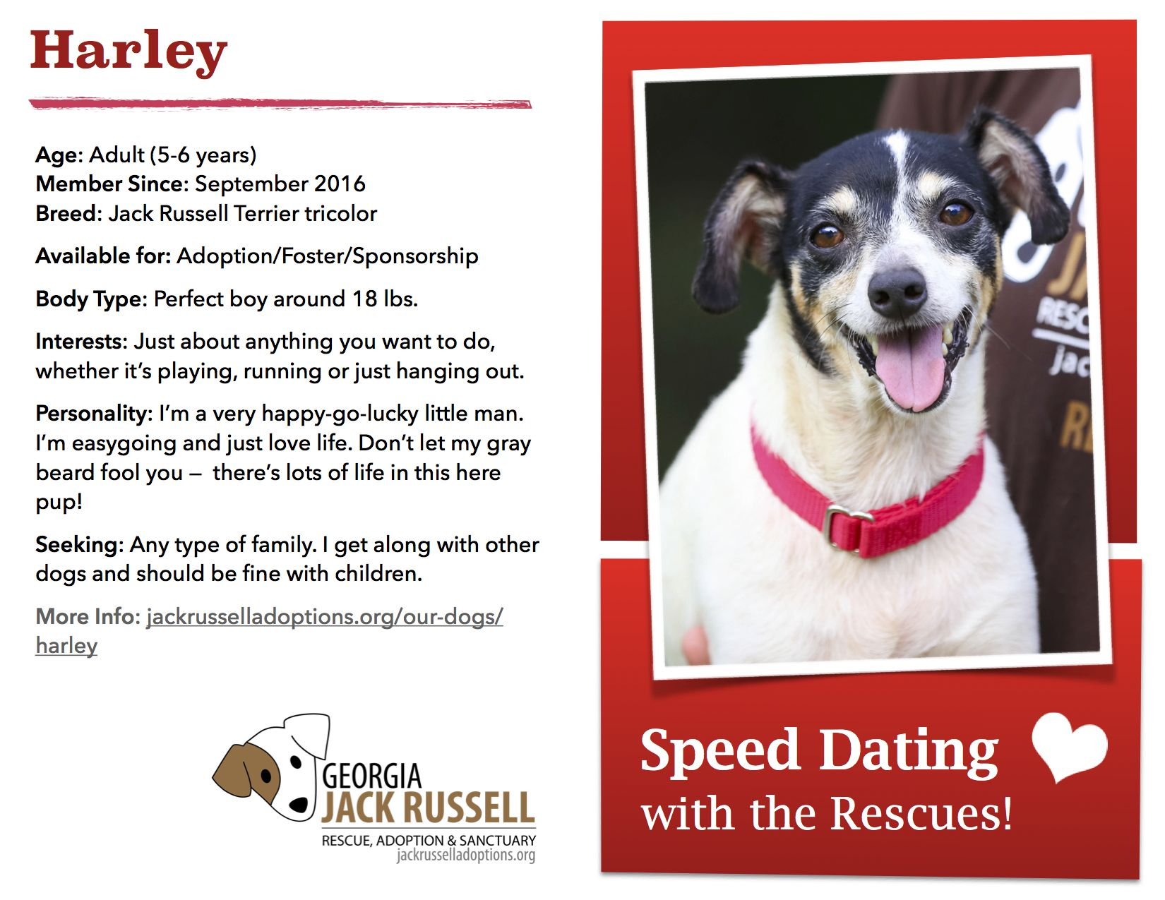 Harley is today's featured rescue! #Adoptable #JackRussell #Georgia