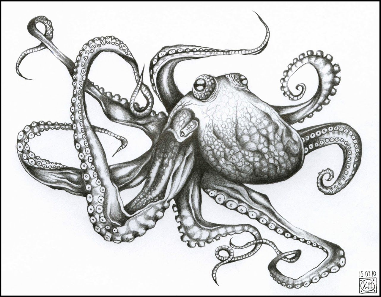 Realistic Drawings Of Octopus | www.pixshark.com - Images ...