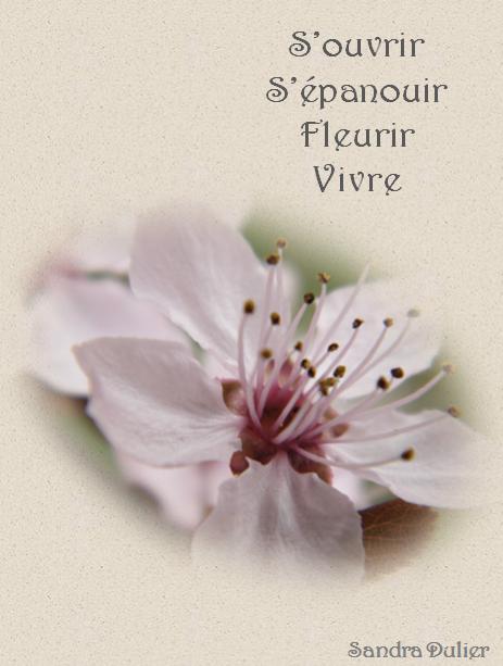 carte virtuelle fleur de prunus citation pens e. Black Bedroom Furniture Sets. Home Design Ideas
