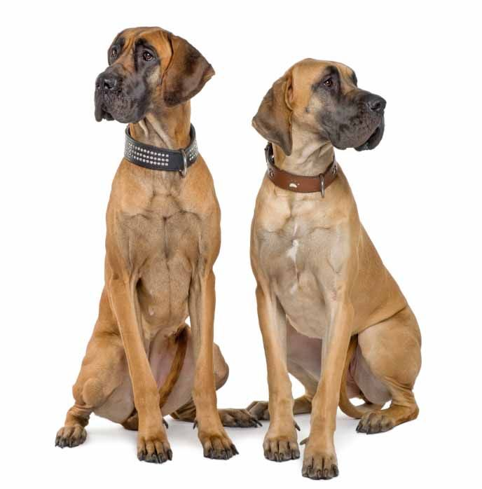 Names For Large Dogs Perfect For The Big Breed Pet Insurance