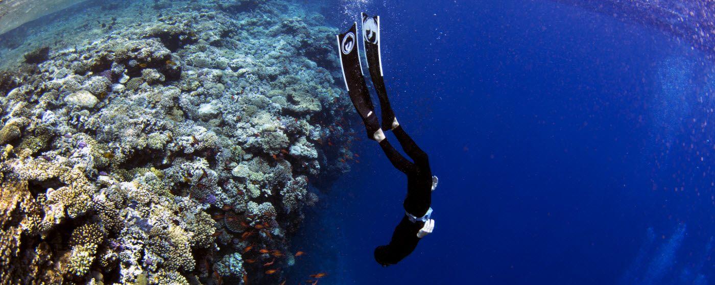 Learn To Scuba Dive Get Your Scuba Certification Scuba Diving