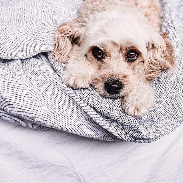 Pin By Katelin On Puppies Pinterest Cuddling And Pup