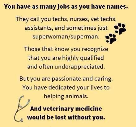To Fellow Vet Techs Vet Tech Quotes Veterinary Technician Quotes Vet Tech School