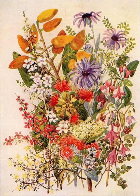 NEW ZEALAND FLOWERS Chart lovely old antique flower