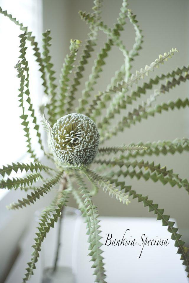 Designing with Resendiz Brothers Flowers & Foliages (via Bloglovin.com )