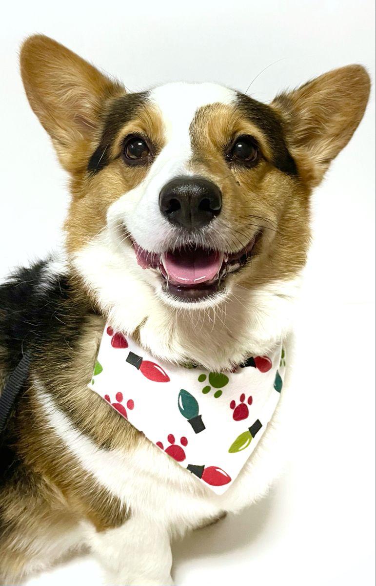 Christmas Light Dog Bandana!