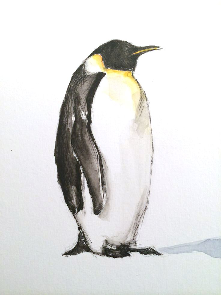 Penguin - #watercolour an pen.