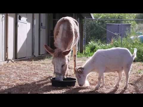VIDEO: A Victim Rescued from Hoarder, Saved by Best Friend