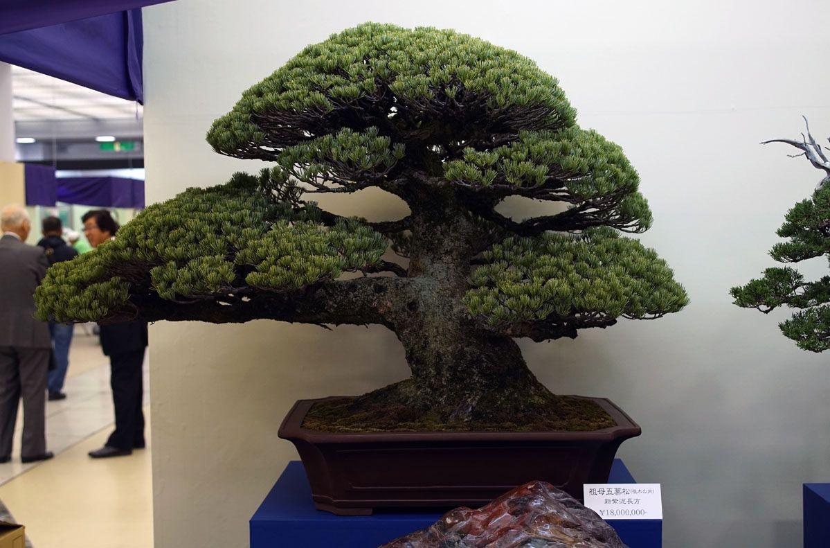 The Most Expensive Bonsai Tree Indoor Bonsai Tree Bonsai Plants