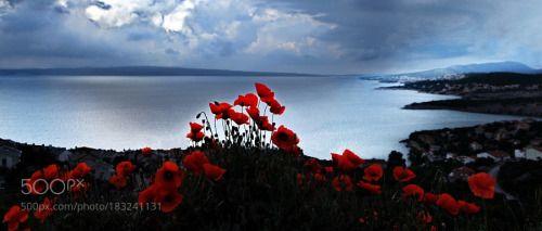 Mohn (Kroatische Küste) by Archko  landscape sea water nature plant eau Landschaft Meer Küste Mohn Pflanze Kroatien Mohn (Kroatische Kü