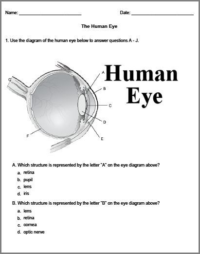Worksheets Structure Of Human Eye Worksheet parts of an eye free printables and eyes resource for biology worksheets experiments