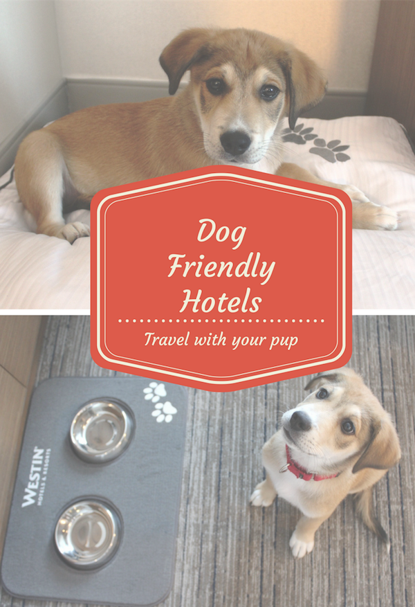 How To Vacation With Your Dog With Images Dog Friendly Hotels