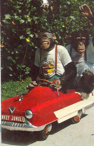 Monkeys In Clothes Monkey S Big Amp Small Monkey Funny