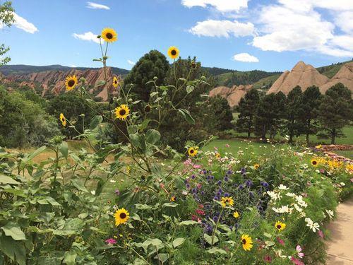 Kari LikeLikes: Denver Summer Flowers #nature #mountains #nature #colorado #denver #flowers #adventure #followback #random #amazing #F4F