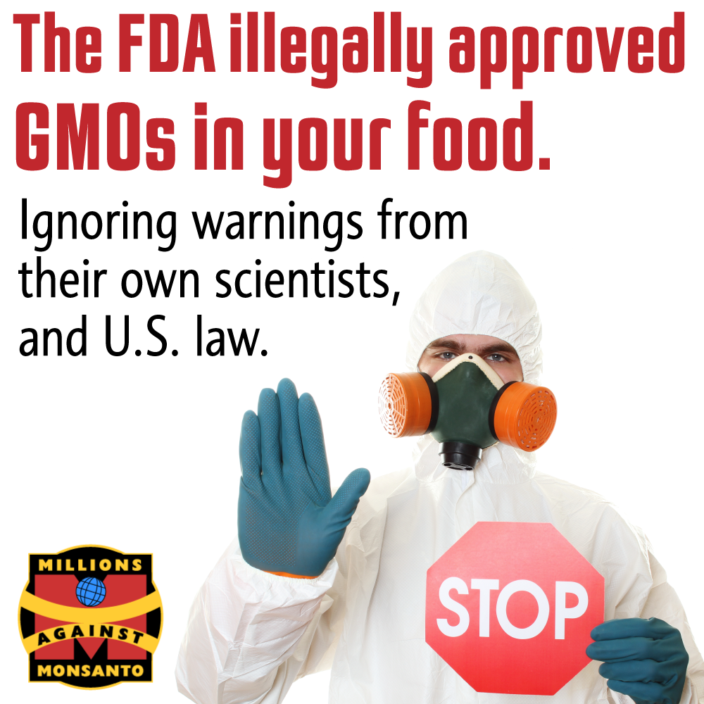 Why The Fda S Policy On Genetically Engineered Foods Is Fraudulent And Illegal Gmos Gmo Free Food Fda