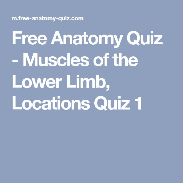 Free Anatomy Quiz - Muscles of the Lower Limb, Locations Quiz 1 ...