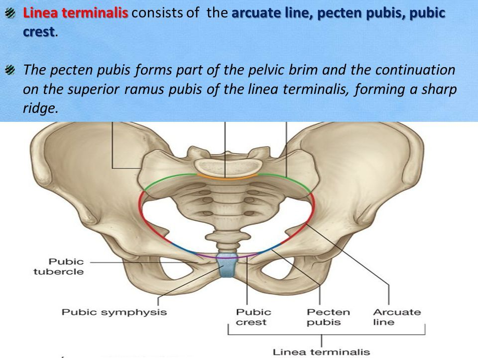 Luxury Anatomy And Physiology For Midwives Photo - Anatomy Ideas ...