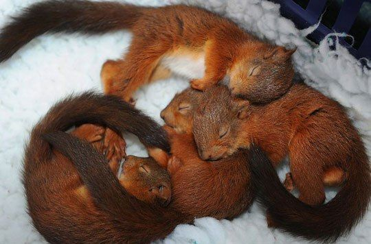 Baby Squirrels Sleeping