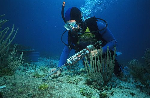 Marine Biologist Salary Becoming a Marine Biologist Go after - marine biologist job description
