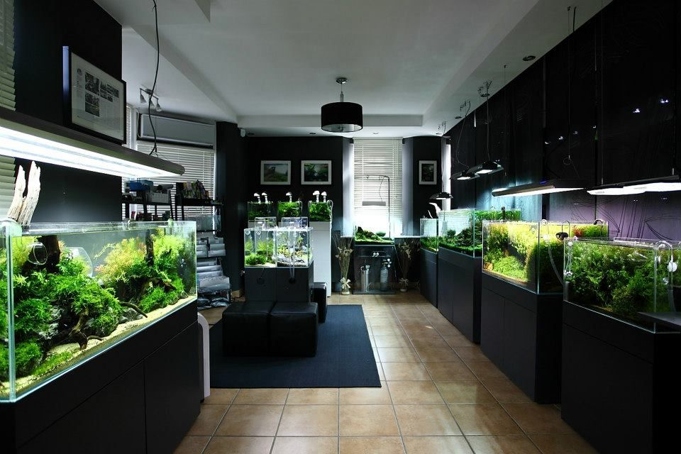 Green Aqua Aquashop Budapest Fishroom Ideas Pinterest Green Aqua Aquariums And