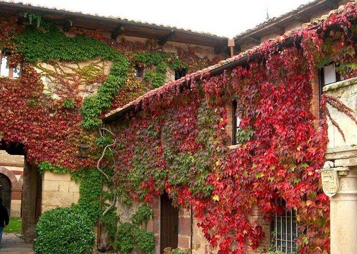 Fachadas De Casas Con Enredaderas Plantas Trepadoras Trepadoras Trepadoras Con Flor