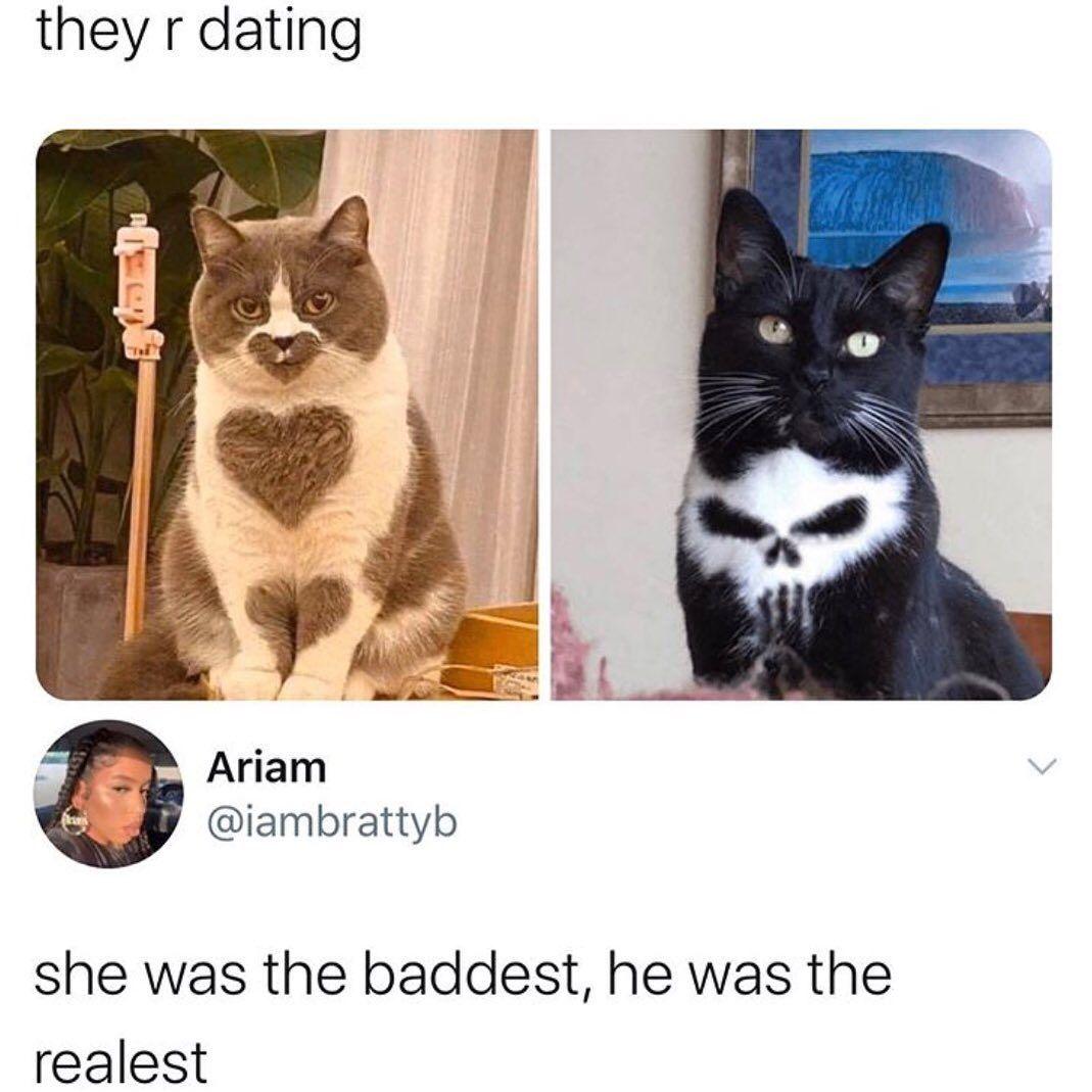 Funny Cats Being Cat Memes Tiktok Compilation September 2020 Https Youtu Be Mbbovdjvr7m Catmemes Cat2020 Tiktokcats Funnycats Cat Memes Cats Animal Gifs