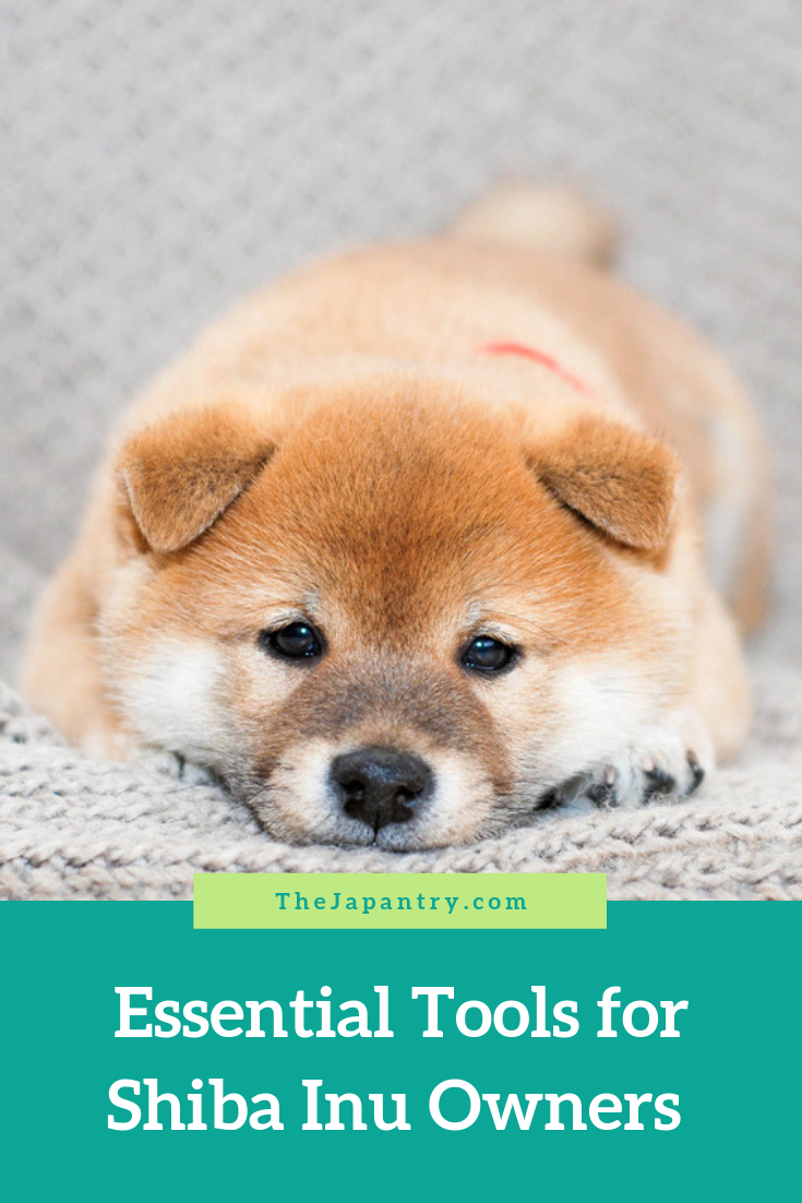 Essential Tools For Shiba Inu Owners The Japantry Shiba Inu Dog Shiba Inu Shiba Inu Puppy