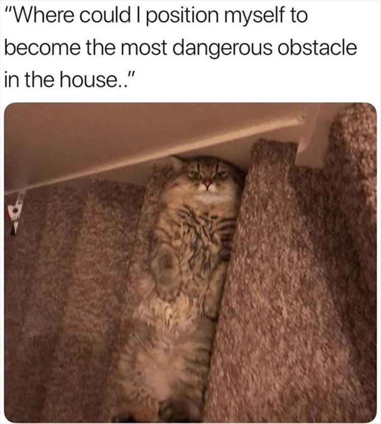 Photo of Funny Animal Memes Of The Day 25 Pics – funny photo
