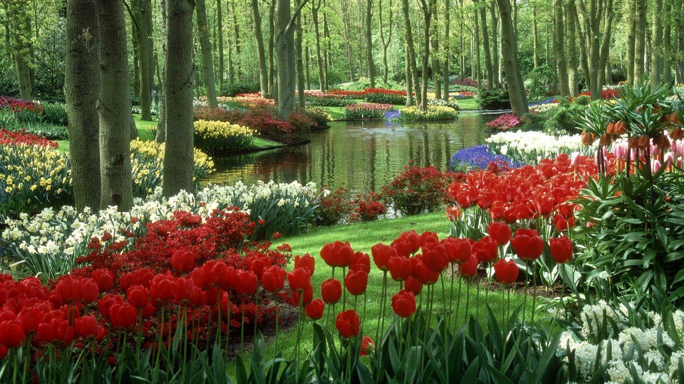 Beautiful Rose Garden Wallpaper flower garden | beautiful flower garden wallpapers in 1366x768