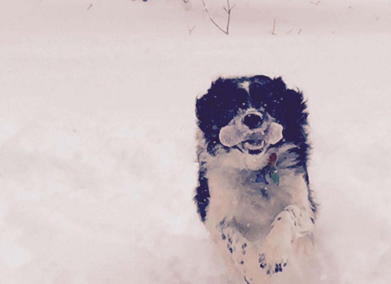 Feb 2015 playing fetch in snow Cedar rapids iowa, Niagra