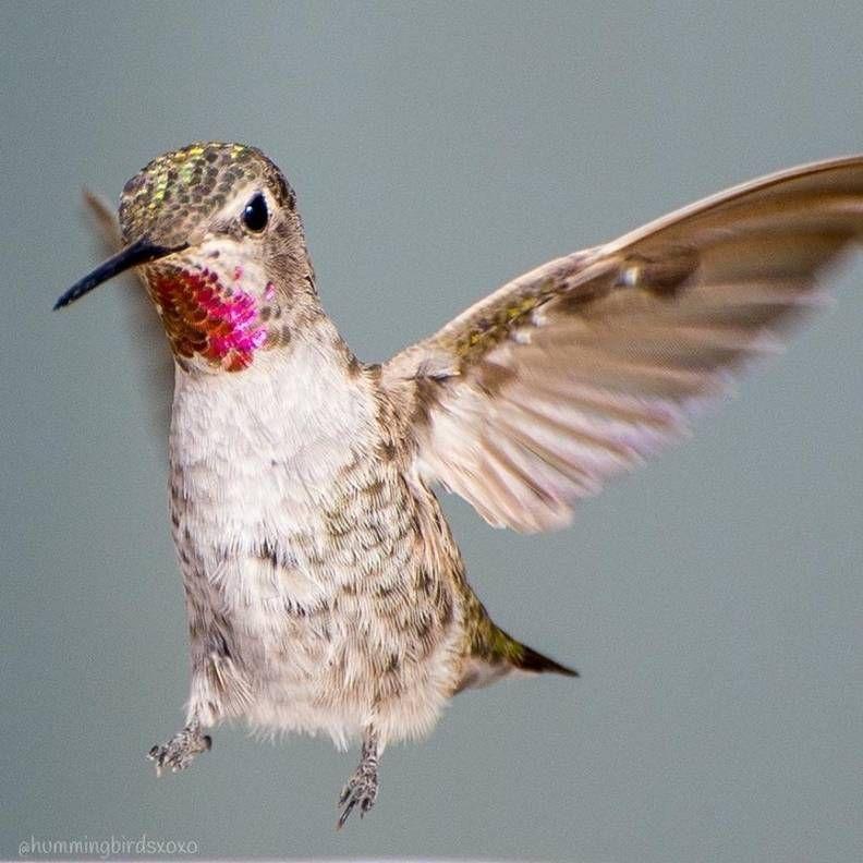Woman Captures Stunning Photos Of Hummingbirds In Her