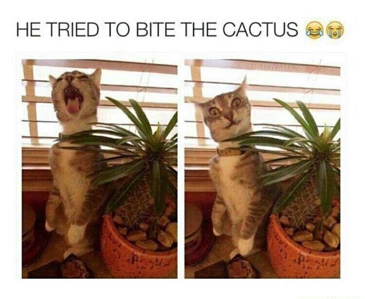 Oooh poor kitty.. »✿❤ Mego❤✿«