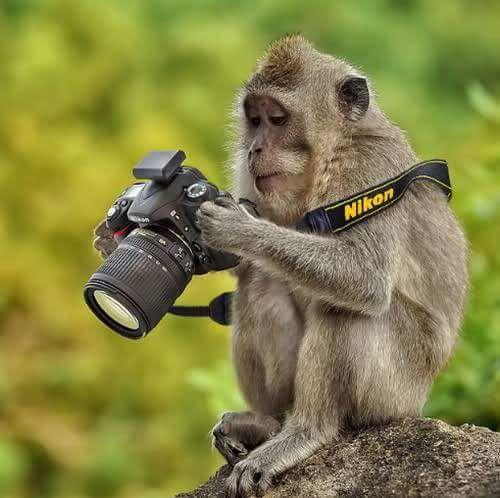 """Résultat de recherche d'images pour """"interest animaux"""""""