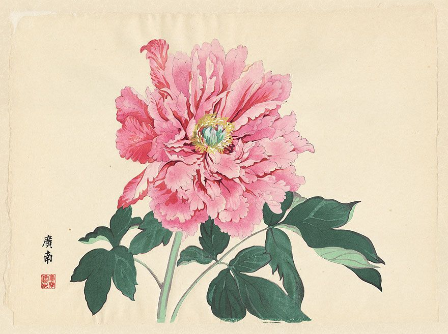 imperial exhibition peony by tanigami konan 1879 1928 花 水彩画 日本画 画