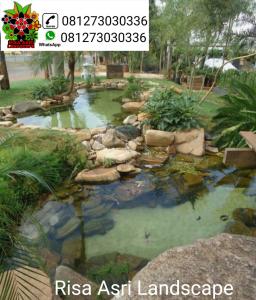 kolam ikan koi minimalis belakang rumah - wan-murkz