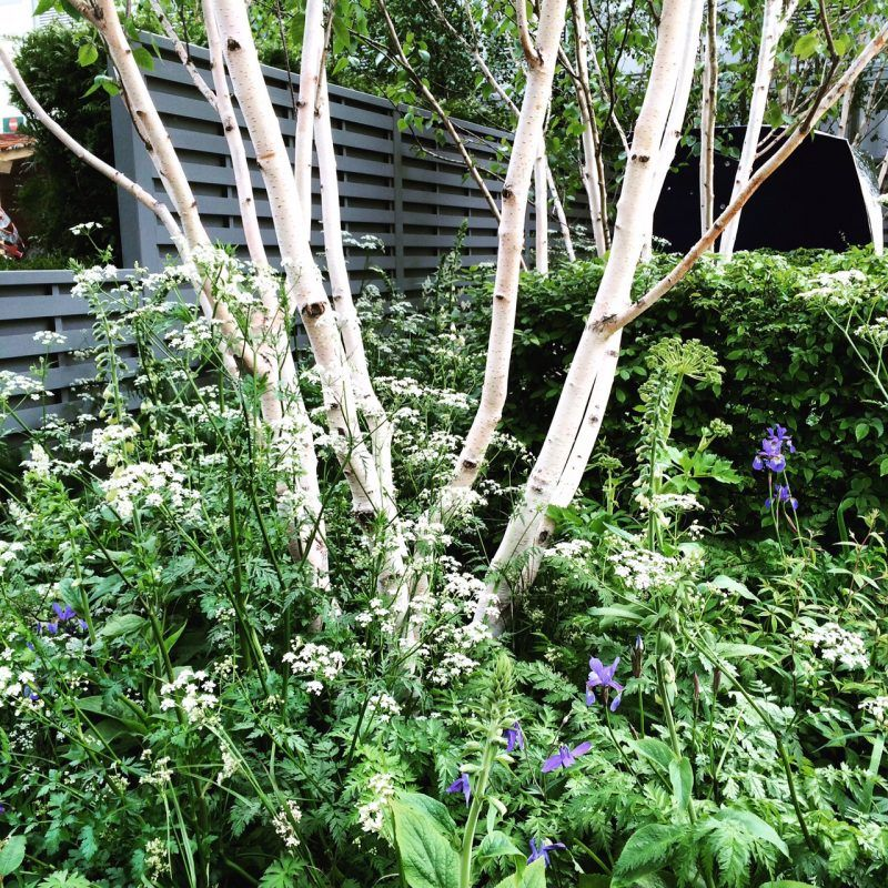 Small Trees For Borders: The 8 Best Perfect-for-privacy Garden Trees