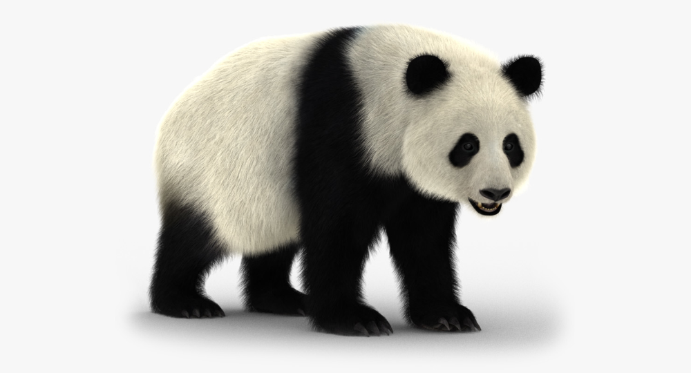 Giant panda rigged bear fur 3D model TurboSquid 1150202