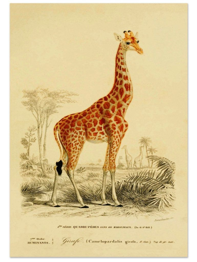 b4677f731a Best of Etsy  Antique Animal Prints