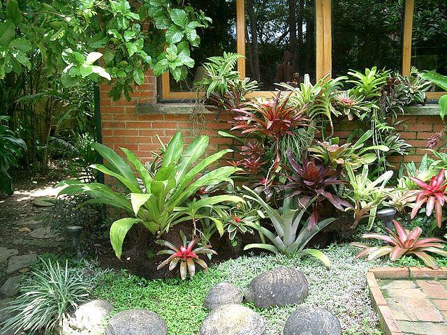 Jardin De Bromelias Bromeliads Landscaping Tropical Garden