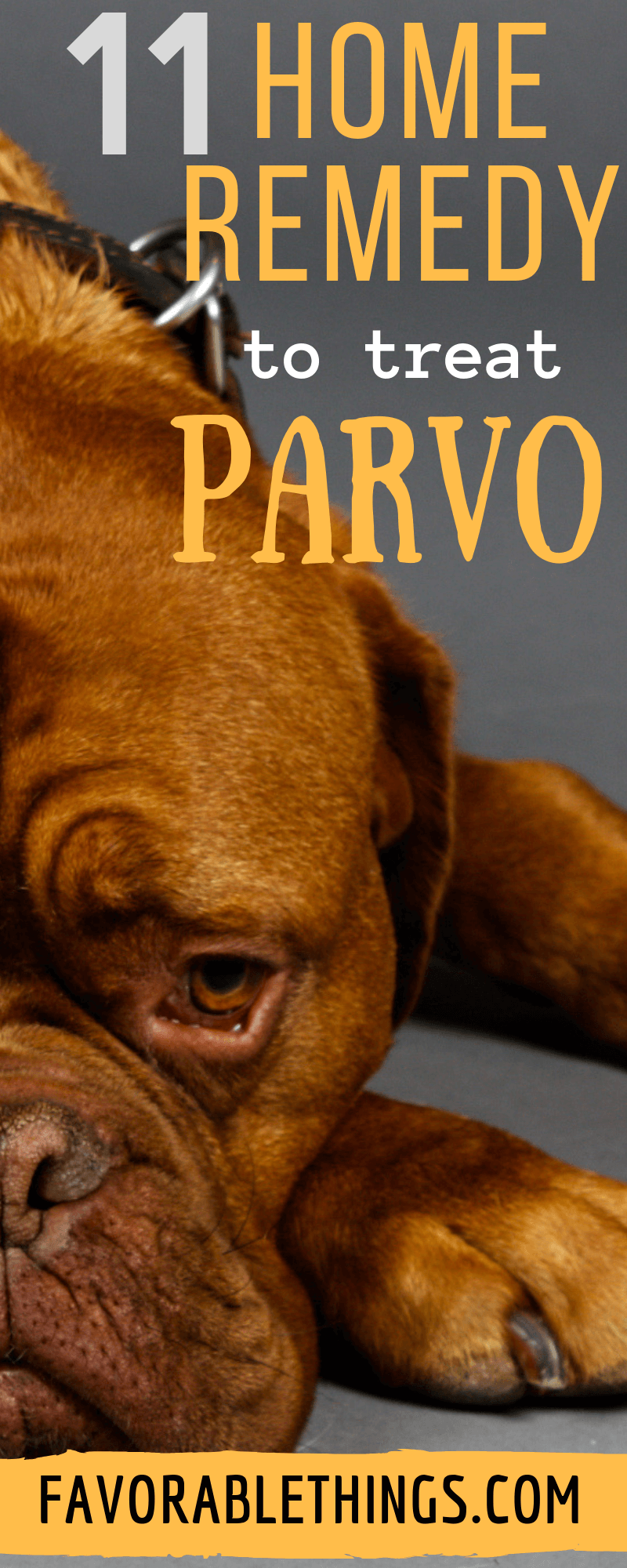 11 Working Home Remedies To Get Rid Of Parvo Treat The