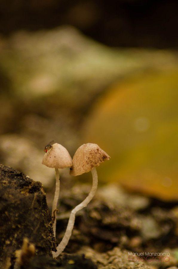Mushrooms by Manuel Manzanero on 500px