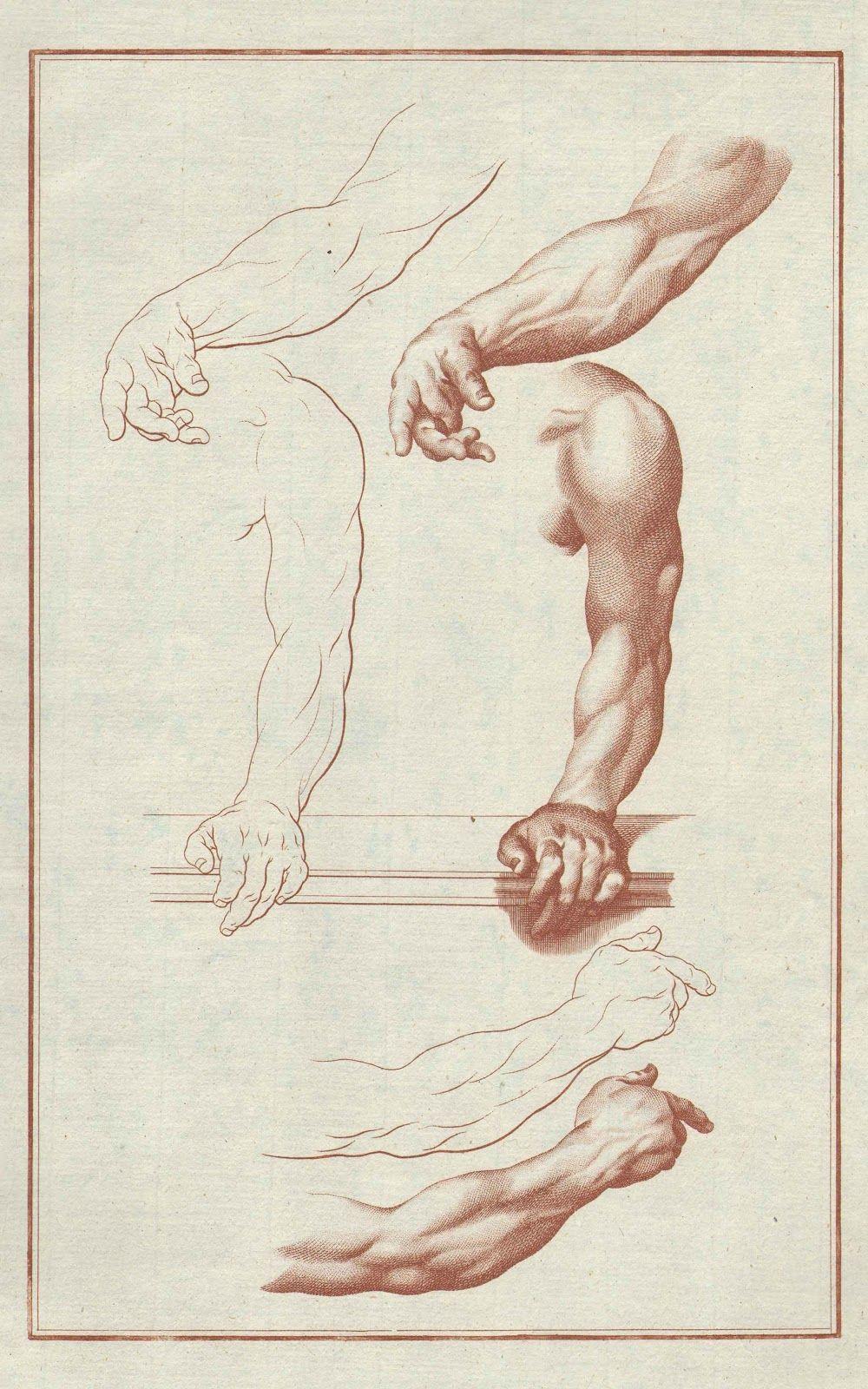 Johann Daniel Preissler | ANATOMIA ARTÍSTICA | Pinterest | Anatomía ...