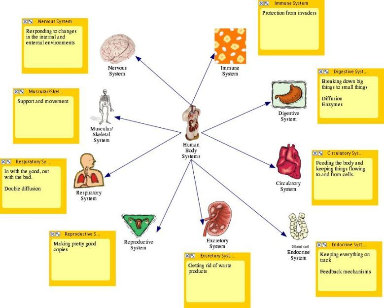 Image result for human body organ chart Human body