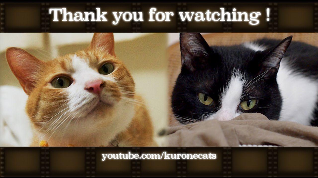 2匹の猫と暮らす日々 Diary Cats Tv Cats Video Of Hatch And Mac 子猫 茶トラ猫 猫