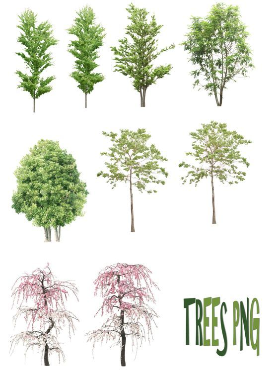 trees png by mysticmorningdeviantartcom on deviantart architecture graphicslandscape architecturelandscape sketcharchitecture - Architecture Drawing Of Trees