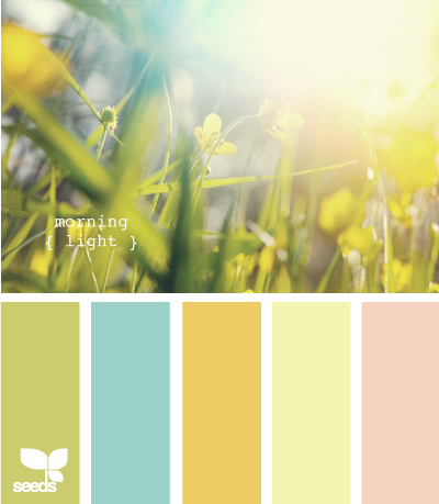 Nice U0027morning Lightu0027 Colour Range From Seeds   Perfect Spring U0026 Easter Set
