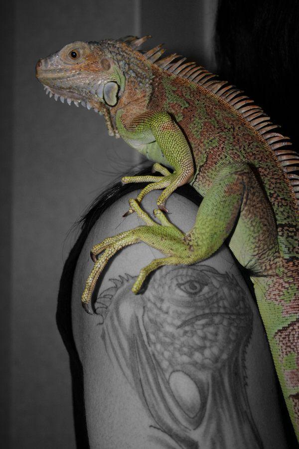 Iguana Tattoo By RetardMessiah On DeviantArt