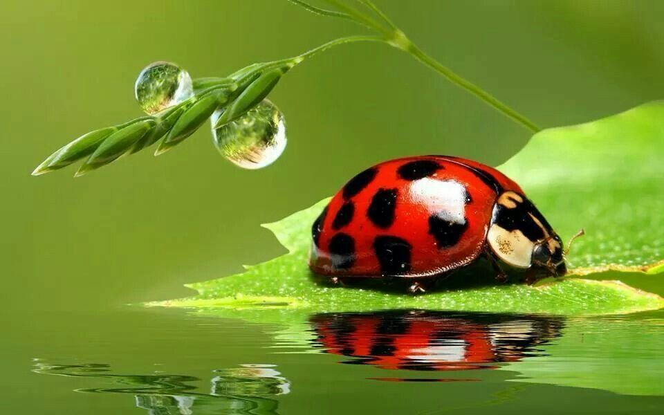 After rain#Lady Bug