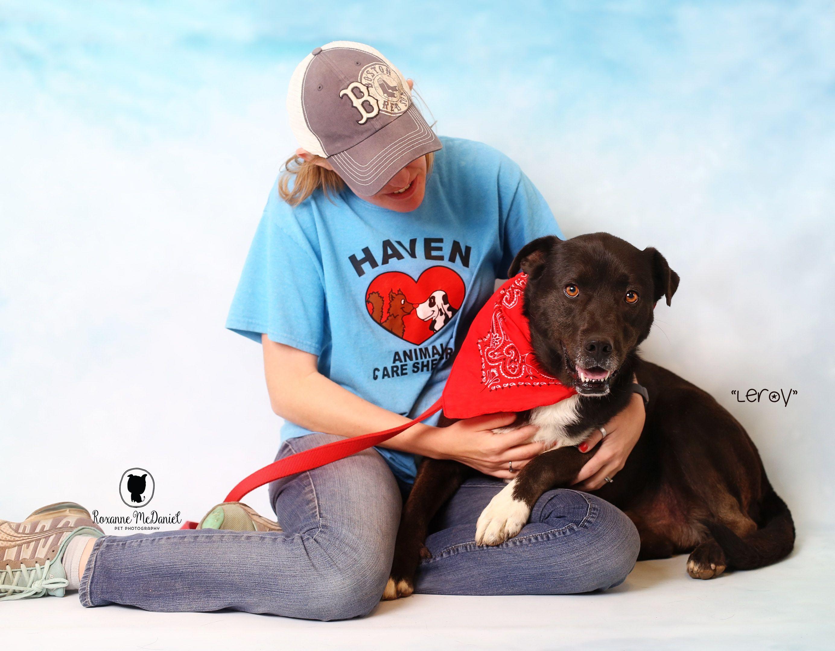 Adopt Leroy On Dog Collars Girly Man And Dog Pitbull Puppies